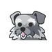 ミニチュアシュナウザー(小) 犬ステッカー