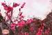青葉の梅林~Plum grove~⑦