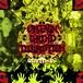 "Orgasm Grind Disruptioin (OxGxD) ""COVID-19"" CD"