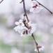 フォトパネル*【桜が咲いたら】