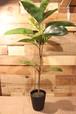 MAGIQデコラゴムミニポット GREEN 鉢植え観葉植物