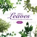 Leaves(グラフィック素材・JPEG)