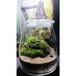 苔ボトル Kokebottle Moss bottle ライト付きセット 003