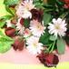 【送料無料】【成人の日】【誕生日】ガーベラとバラの花束(生花)(アカ・ピンク系) FL-SE-09
