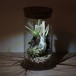 bottle terrarium 95