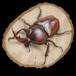 【原画】輪切り絵アート:赤いカブトムシ ホワイトアイ Version2 (Rhinoceros beetle)