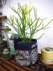 Fabric Basket「Gobelin」/  M size