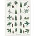 アート ポスター A4 サイズ KOUSTRUP & CO. - Conifer 針葉樹