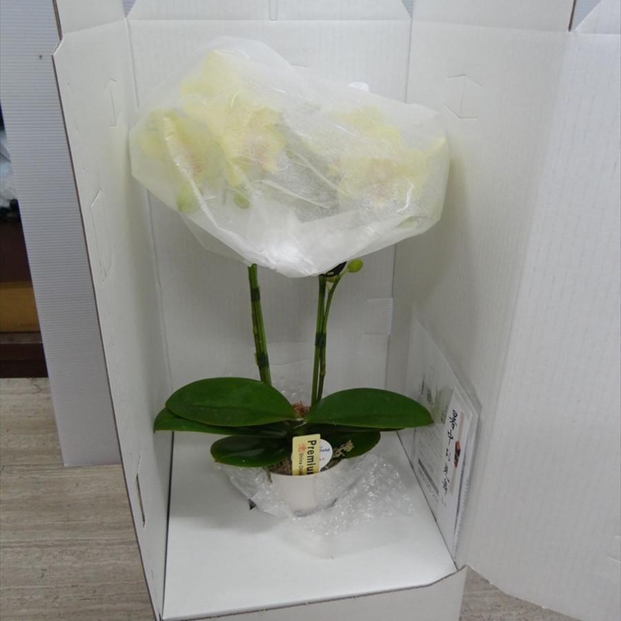 梱包された胡蝶蘭